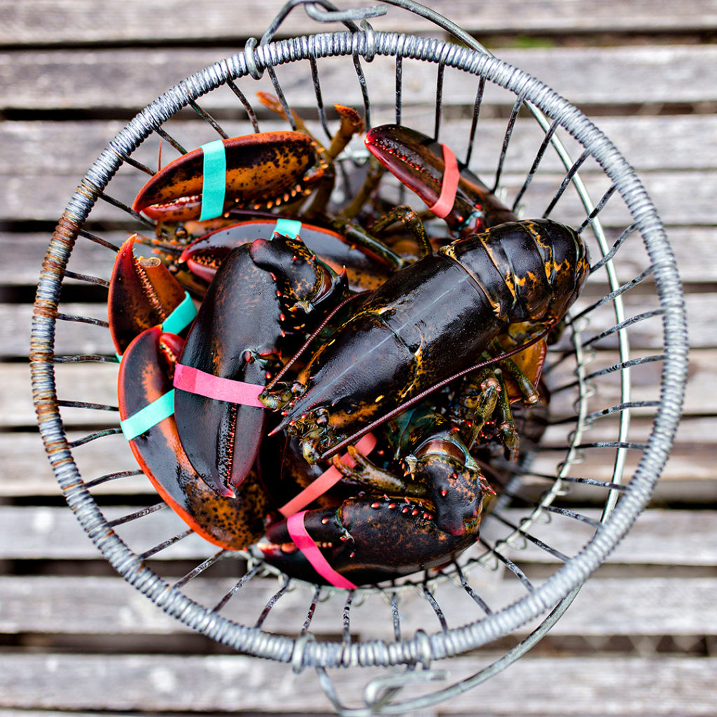 Maine Lobsters pair well with Maine Craft Beer